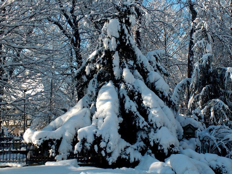 25_drzewo