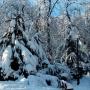 25_drzewo3